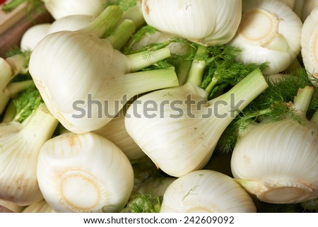 Bulbs of fresh fennel vegetable on market stall for sale