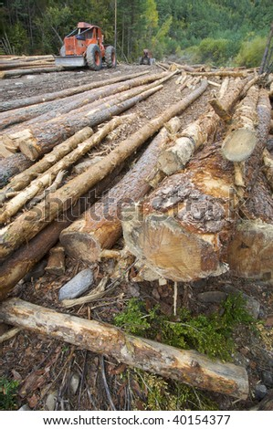buldozer and cutted trunks in a forest