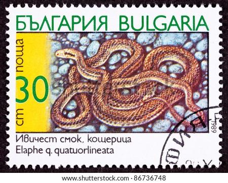 BULGARIA - CIRCA 1989:  A stamp printed in Bulgaria shows a coiled Four-Lined Rat Snake, Elaphe quatuorlineata, circa 1989. - stock photo