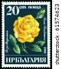 BULGARIA - CIRCA 1985: a stamp printed in Bulgaria shows  flowers  the rose sort Rosa Radiman, circa 1985 - stock photo