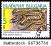 BULGARIA - CIRCA 1989:  A stamp printed in Bulgaria shows the Javelin Sand Boa Constrictor Snake, Eryx jaculus, circa 1989. - stock photo