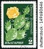BULGARIA - CIRCA 1970: post stamp printed in Bulgaria shows image of opuntia drummondii from cacti series, Scott catalog 1852 A745 2s green yellow white, circa 1970 - stock photo