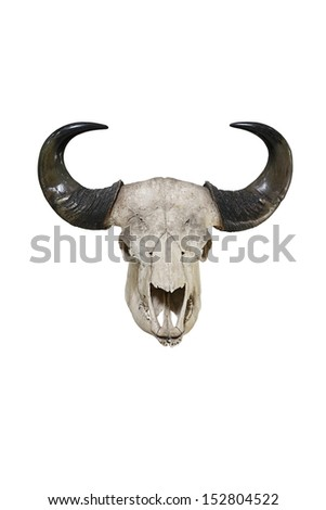 Bull big horns isolated on white background - stock photo