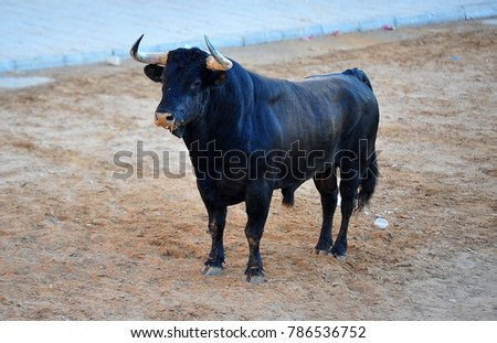 bull in countryside