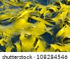Bull Kelp or Durvillaea Antarctica blades floating on ocean surface background texture pattern - stock photo