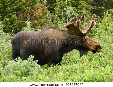 Hindu single men in moose lake