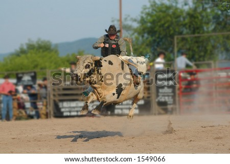 Bull-rider attempting to stay on jumping bull - stock photo