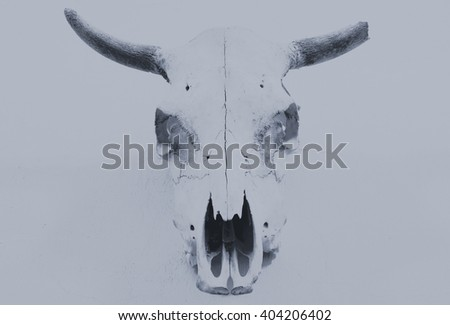 bull scull on the wall, retro vintage effect image - stock photo
