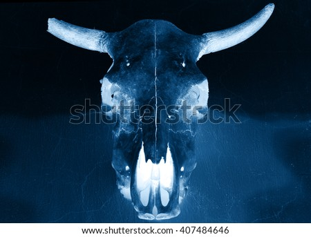 bull scull on the wall, x-ray effect photo - stock photo