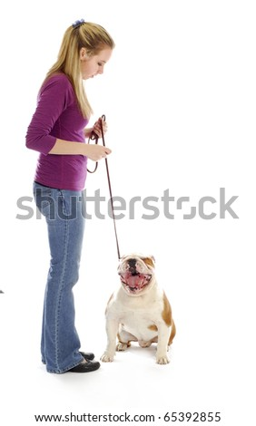 bulldog yawning at woman teaching the dog to sit with reflection on white background - stock photo