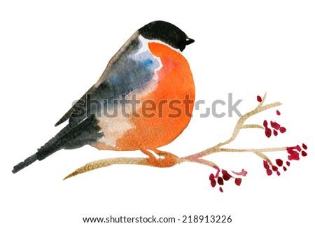 Bullfinch on a branch of rowan. - stock photo