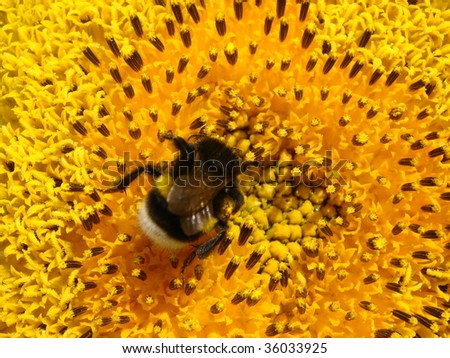 bumble-bee is a great worker - stock photo