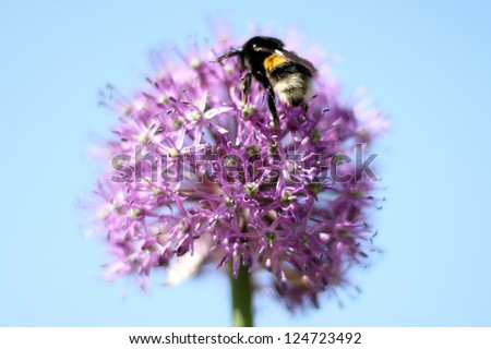 Bumble-bee sitting on  flower - stock photo