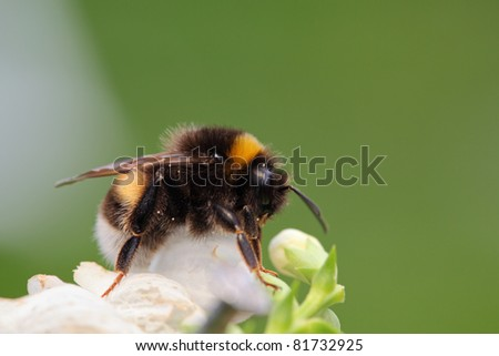 Bumble-bee sitting on green leaf - stock photo