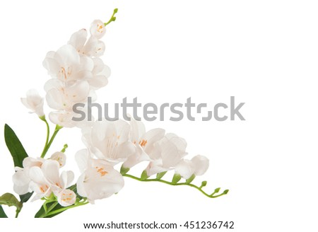 bunch beautiful branch flowering-plant with white flower, on white background, isolated - stock photo