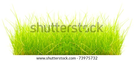 Bunch of a fresh spring grass with space for your text. - stock photo