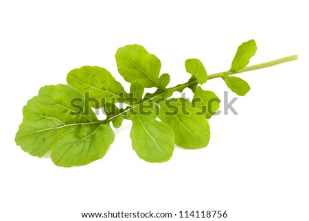 Bunch of arugula isolated on white