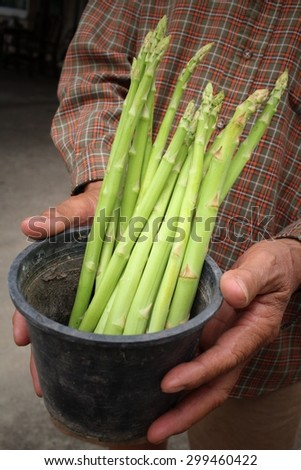Bunch of asparagus with hands