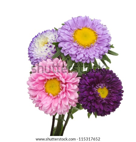 Bunch of aster daisy flowers isolated against white - stock photo