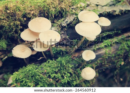 Bunch of autumnal fungi grows over moss - stock photo