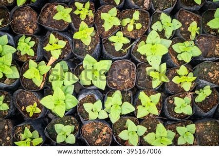 bunch of baby plants growing inside of pots - stock photo