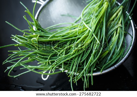 Bunch of Barba di frate (Salsola soda, Saltwort) - stock photo