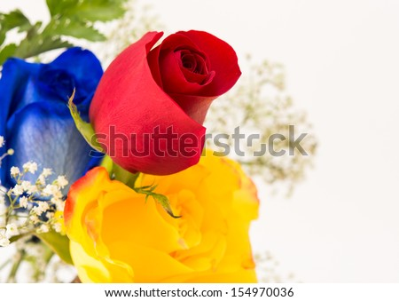 Bunch of beautiful roses for a special occasion. Yellow,red an blue roses isolated in a white background - stock photo