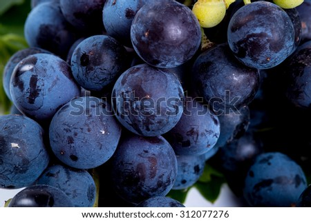 Bunch of black grapes isolated on white background - stock photo