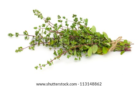 bunch of blooming marjoram - stock photo
