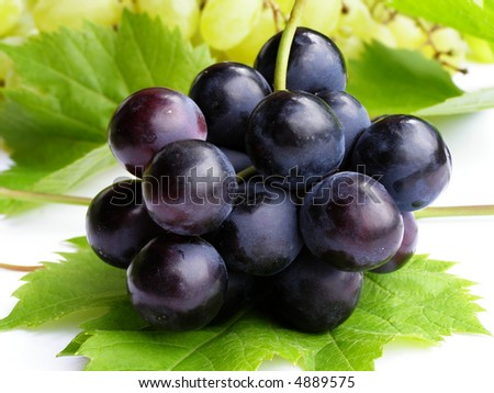 Bunch of blue grapes on green leaf background