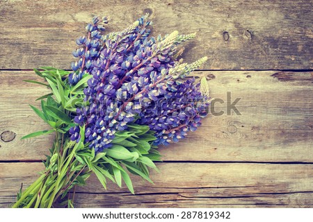 Bunch of blue lupine flowers on wooden background. Retro styled photo.
