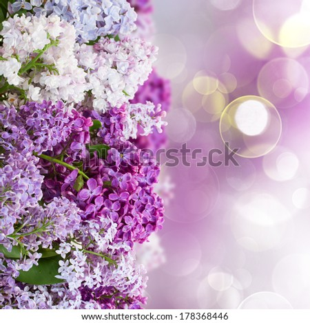 Bunch of c olorful Lilac flowers  on defocused background - stock photo