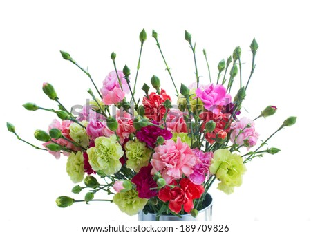 bunch of carnation flowers close up isolated on white background - stock photo