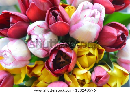 bunch of colorful tulips - stock photo