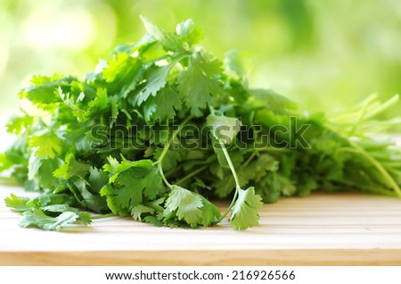 bunch of coriander on table - stock photo