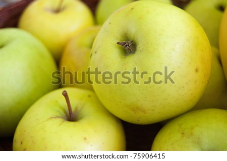 Bunch of delicious green/yellow apples. - stock photo