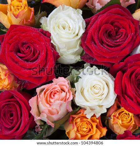 bunch of different many colored roses close up - stock photo