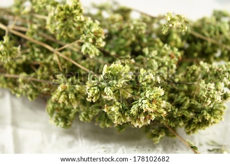 Bunch of dried Sicilian oregano
