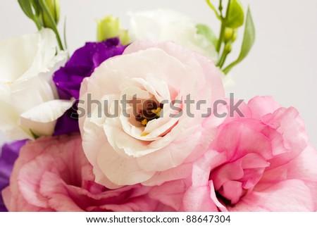 Bunch of eustoma flowers  on white background - stock photo