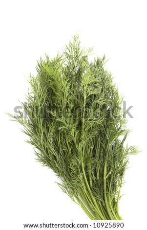 Bunch of fennel over white - stock photo