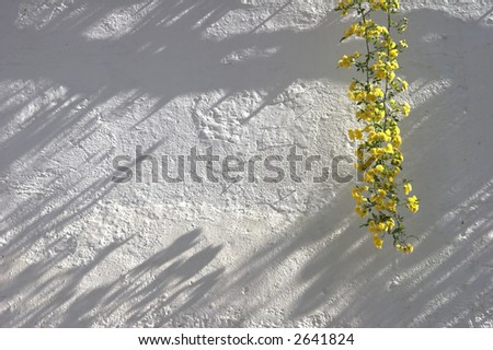 bunch of flower hanging down on a wall - makes a good background - stock photo