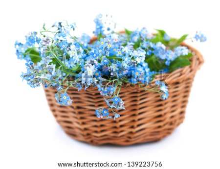 Bunch of forget-me-not flowers in basket on a white background - stock photo