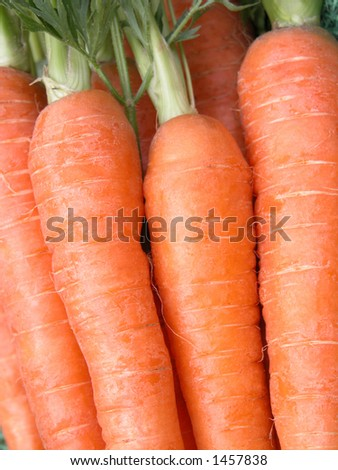 bunch of fresh carrots close-ups
