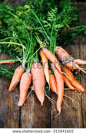 Bunch of fresh carrots with green leaves over wooden background. Vegetable. Food