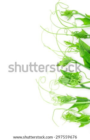 Bunch of fresh chayote on white background. - stock photo