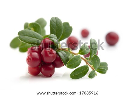 Bunch of fresh cranberries isolated on white - stock photo