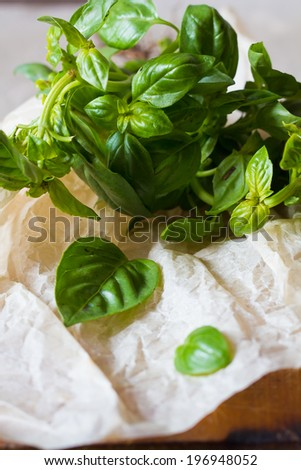 Bunch of fresh green basil on a wooden table