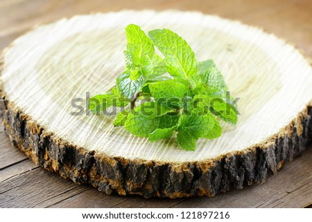 bunch of fresh green mint  on the stump - stock photo