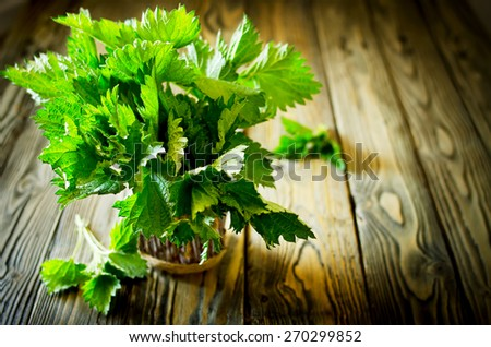 Bunch of fresh green nettle on wooden background. Copy space. Selective Focus  - stock photo