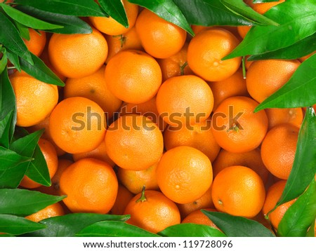 Bunch of fresh mandarin oranges on market - stock photo